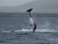 Unforgettable dolphin experience in Ireland