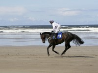 Horse riding and special trips in Ireland